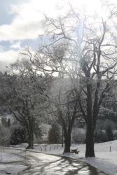 Rochejean arbres enneigés